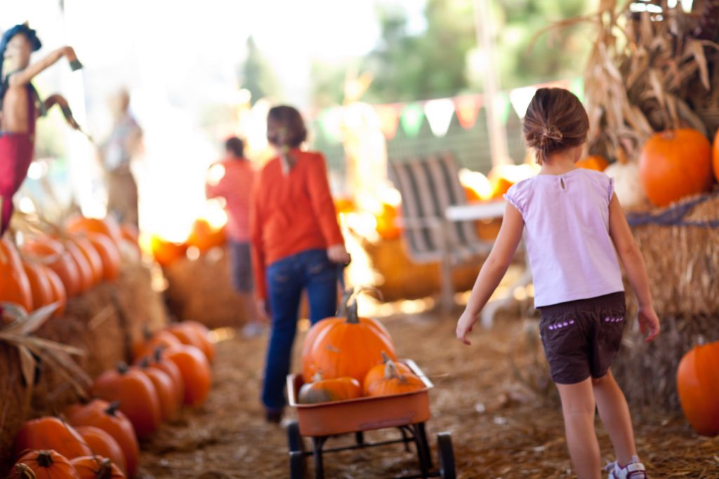 All Saints' Day, Halloween, and fall fun